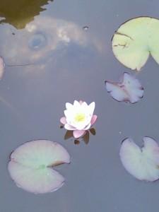 Ouf ! dans Le bassin photo-01382-225x300